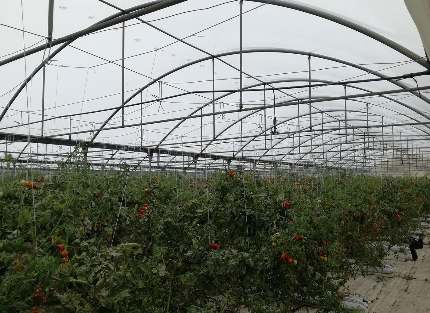 idroleca-coltivazioni-fuori-suolo-P46