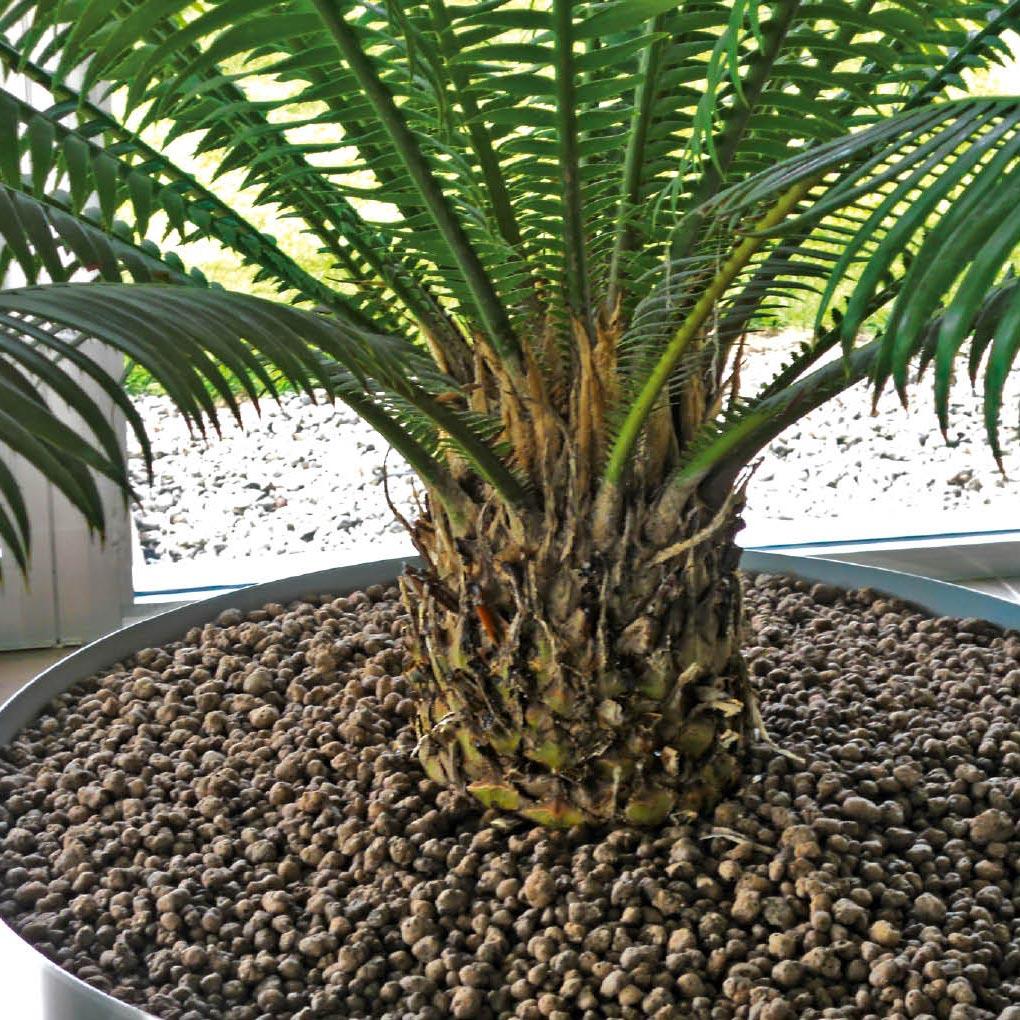 piante-vaso-icona