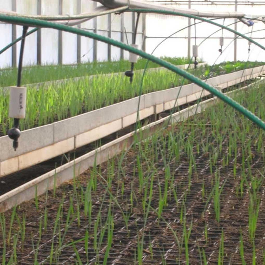 Substrat pour reproduction des plantes: bouturage, germination de graines